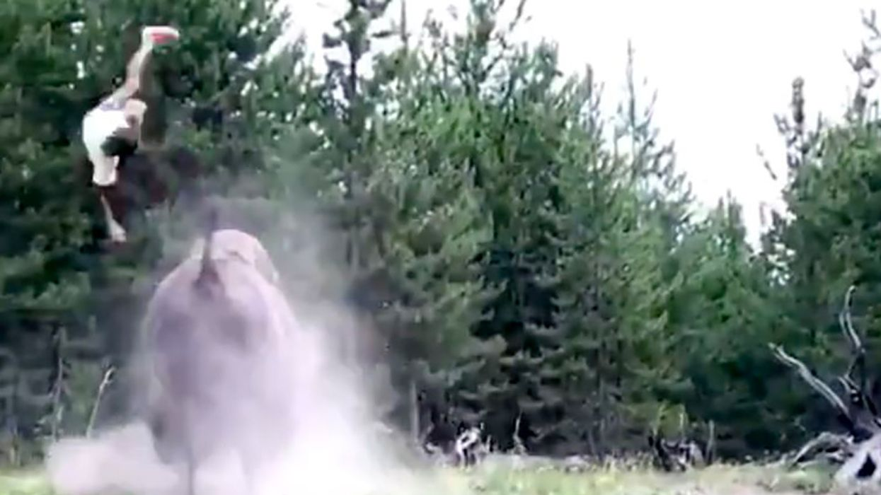 9-Year-Old Girl Tossed in the Air by Charging Yellowstone Bison