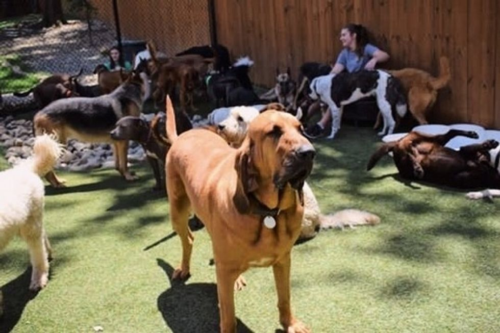 What It's Like Working At A Doggy Daycare