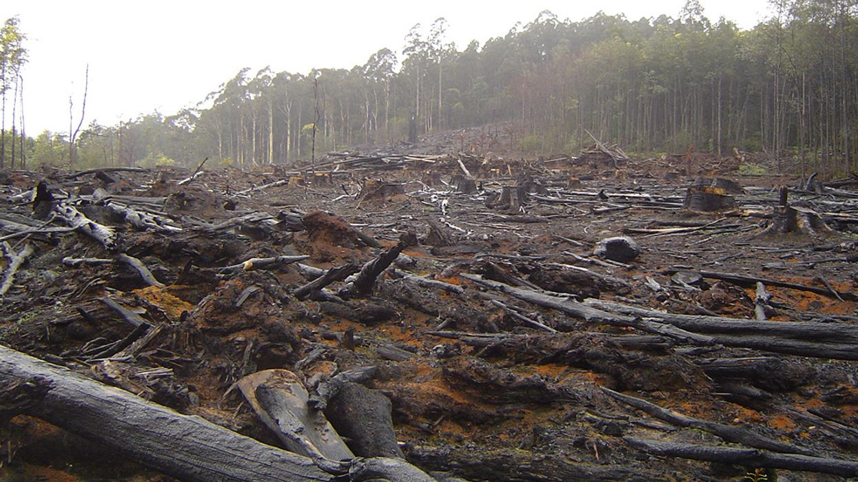 Environmental Damage Is a War Crime, Scientists Say