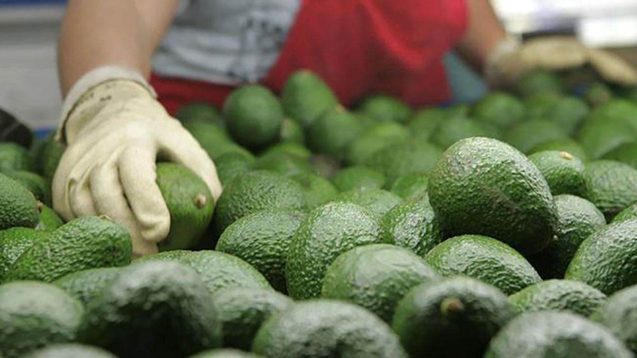 Mexico Facing a Guacamole Crisis