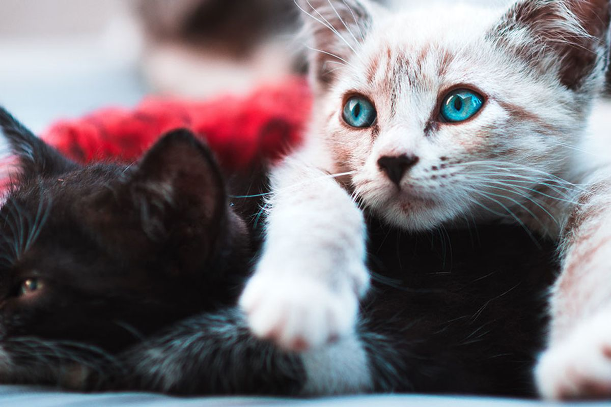 New York just became the first state to ban the 'barbaric' practice of cat declawing
