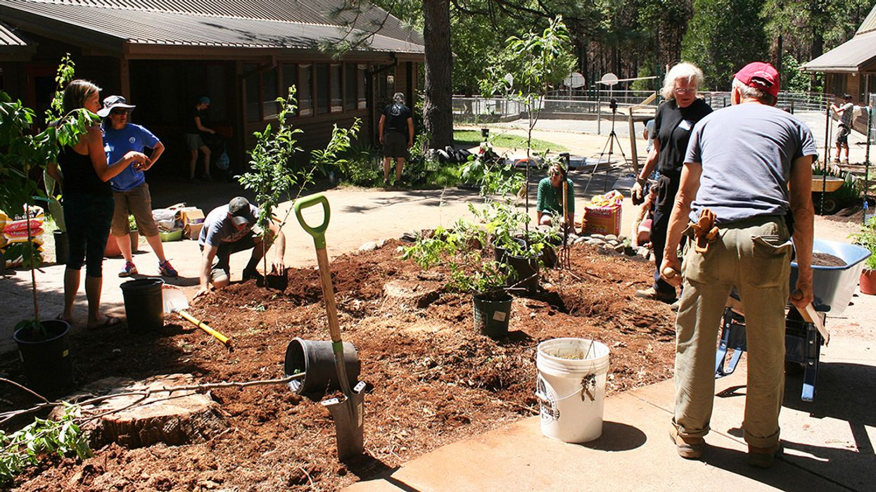 How Permaculture Is Helping Wildfire Survivors Recover