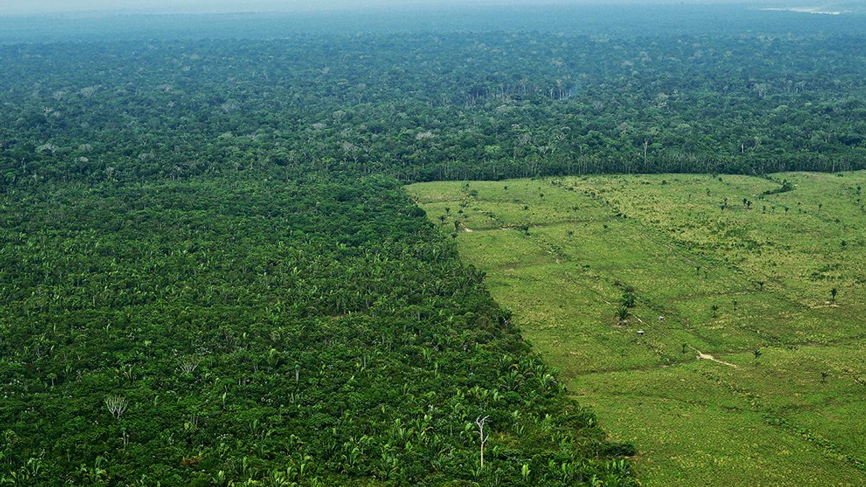 Amazon Deforestation Rate Hits 3 Football Fields Per Minute, Data Confirms