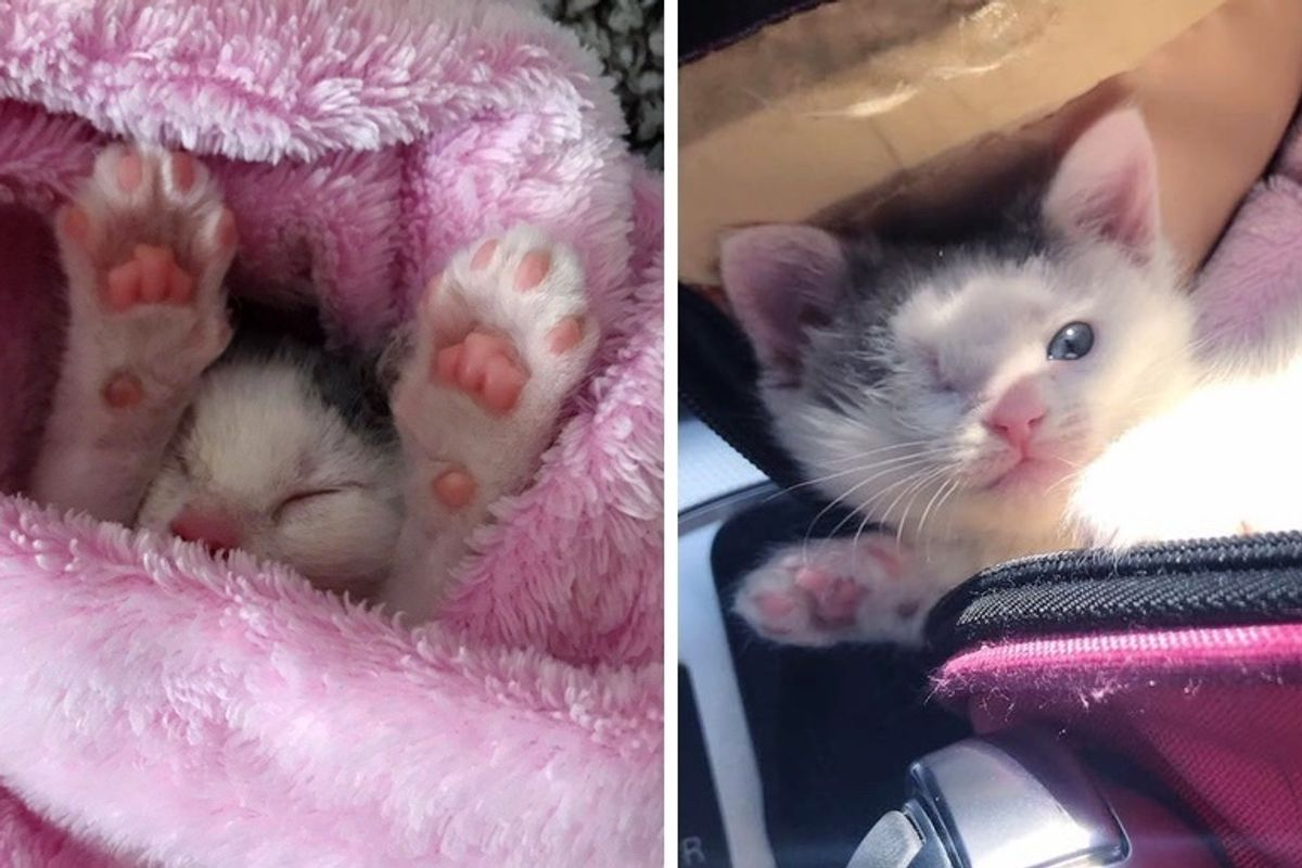 One-eyed Kitten Found on the Street Turns into the Sweetest Purrito