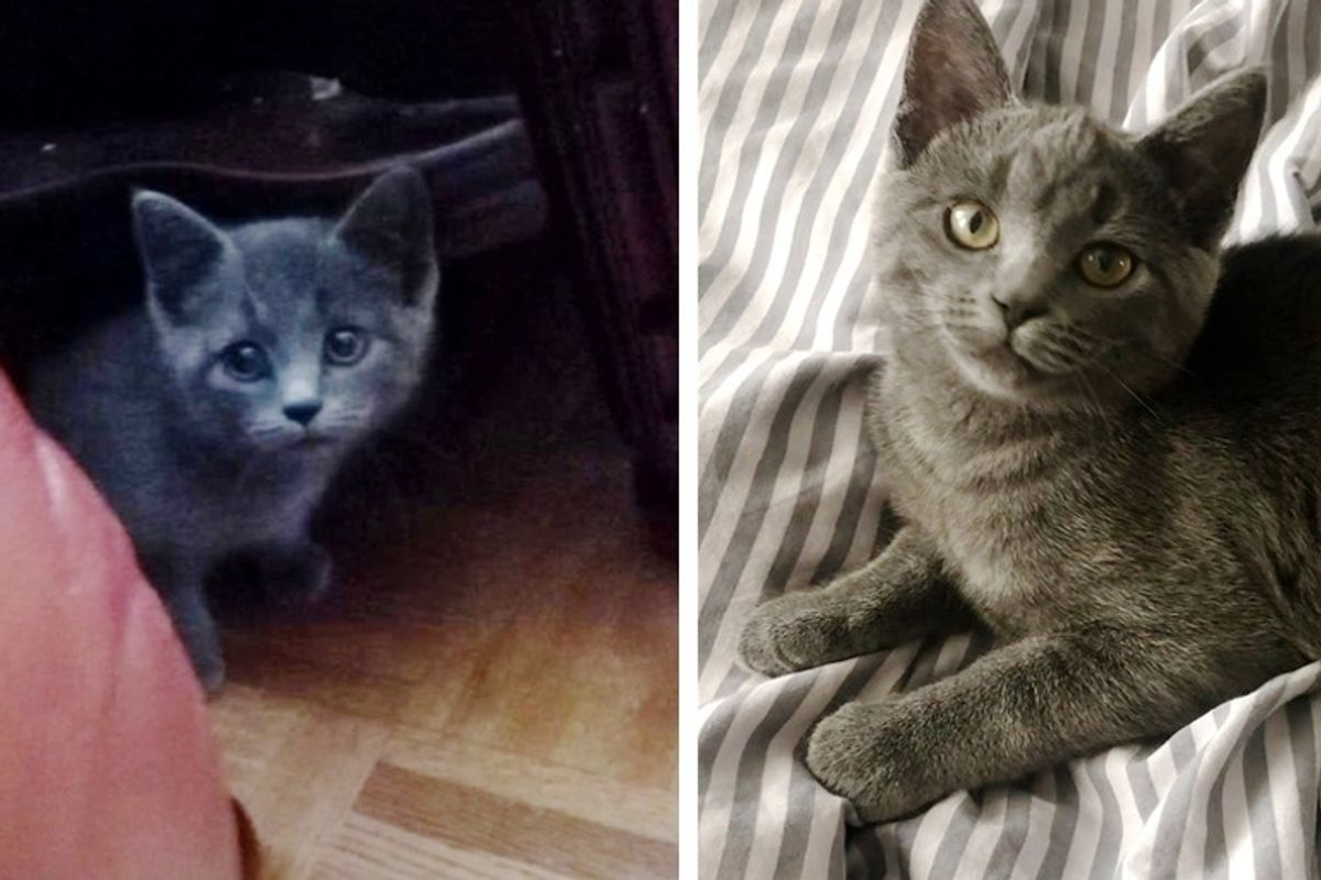 Stray Kitten Rejected by Other Cats Walks Up to Family's Home for Help