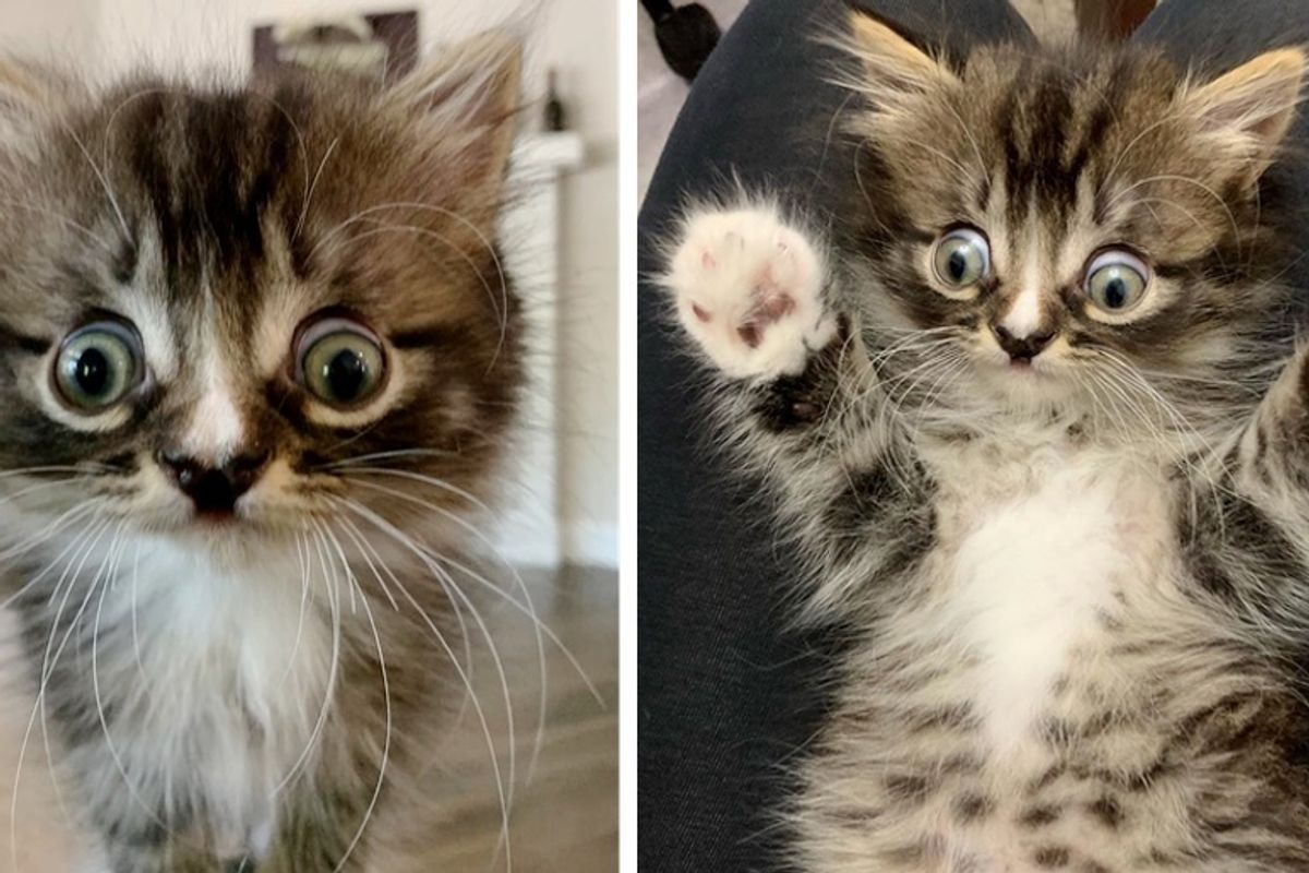 Kitten Born Special Finds Perfect Family to Cuddle After They Rescued Him and His Siblings
