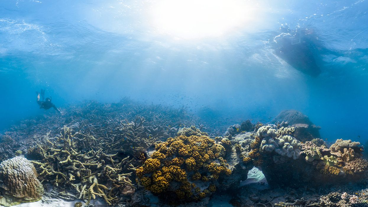 Ocean Heat Waves Kill Coral Instantly, Study Finds