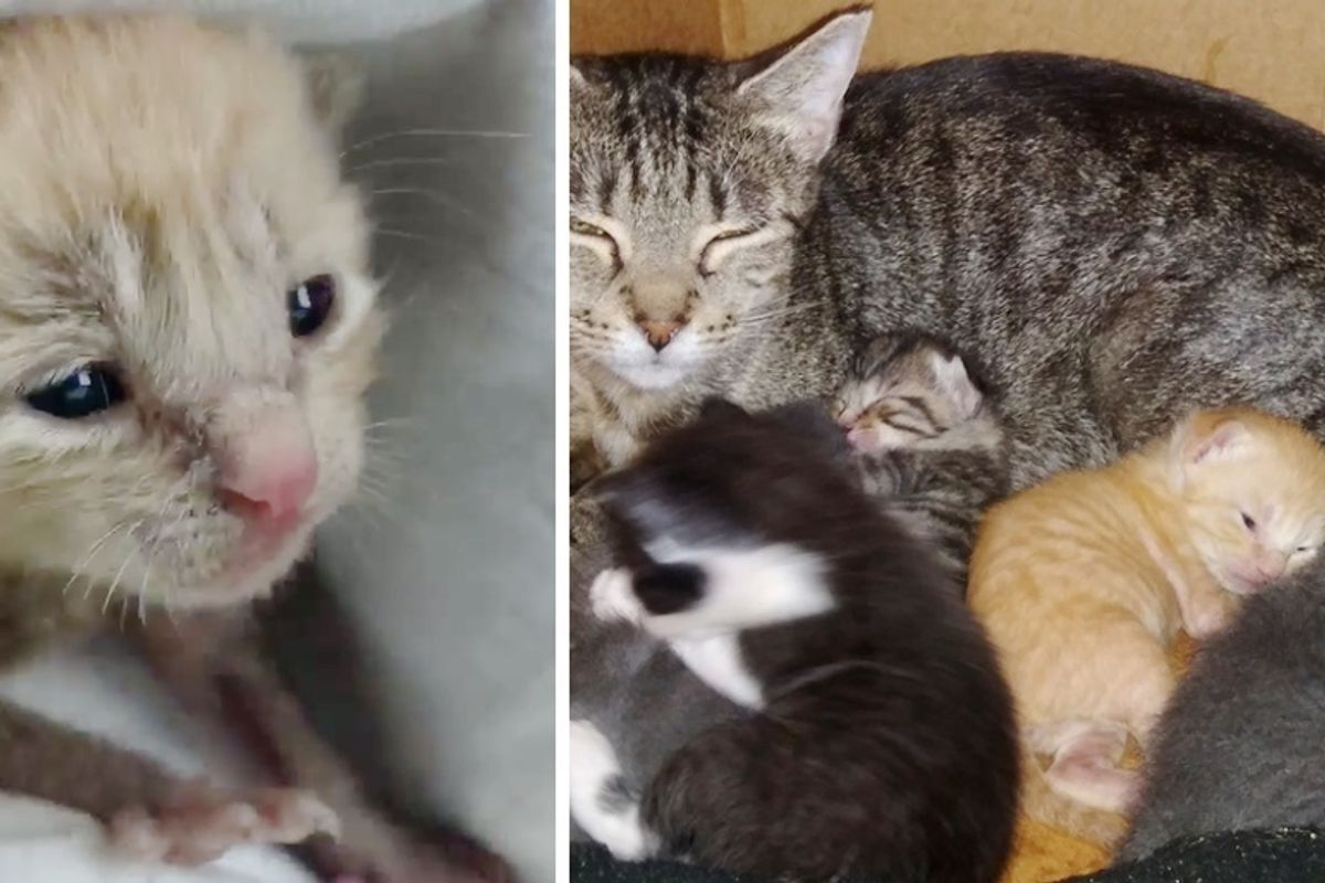 Kitten Rescued Alone on Rainy Day, Can't Stop Purring When He Finds a Family He Needed