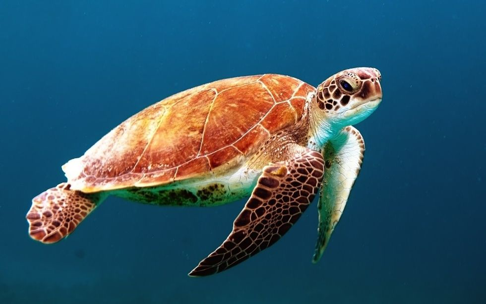5 Incredibly Rude Sea Turtles I Met On My Summer Vacation