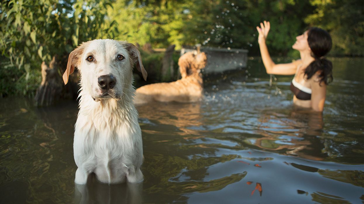 Dogs Are Dying From Toxic Algae in Lakes and Ponds