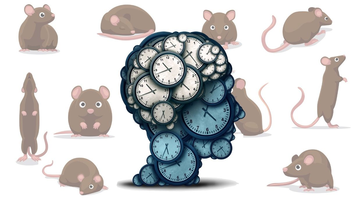Study finds the metronome running rodent brains