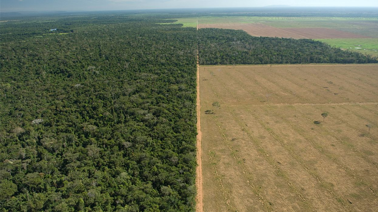 Want to Help Save the Tropics? Eat Less Meat and Dairy, New Study Says