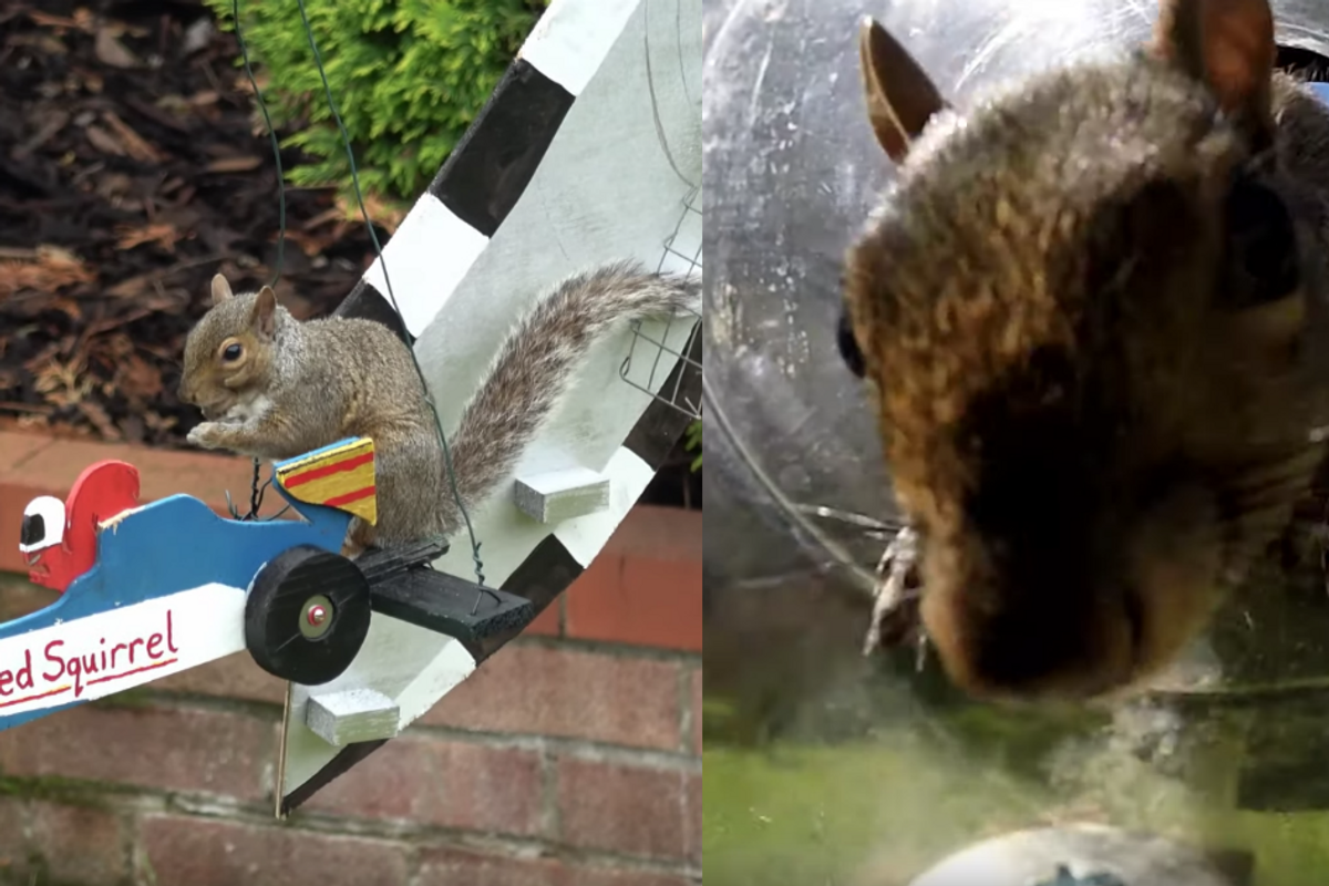 An inventive dad built a Formula 1-themed obstacle course for the squirrels in his garden