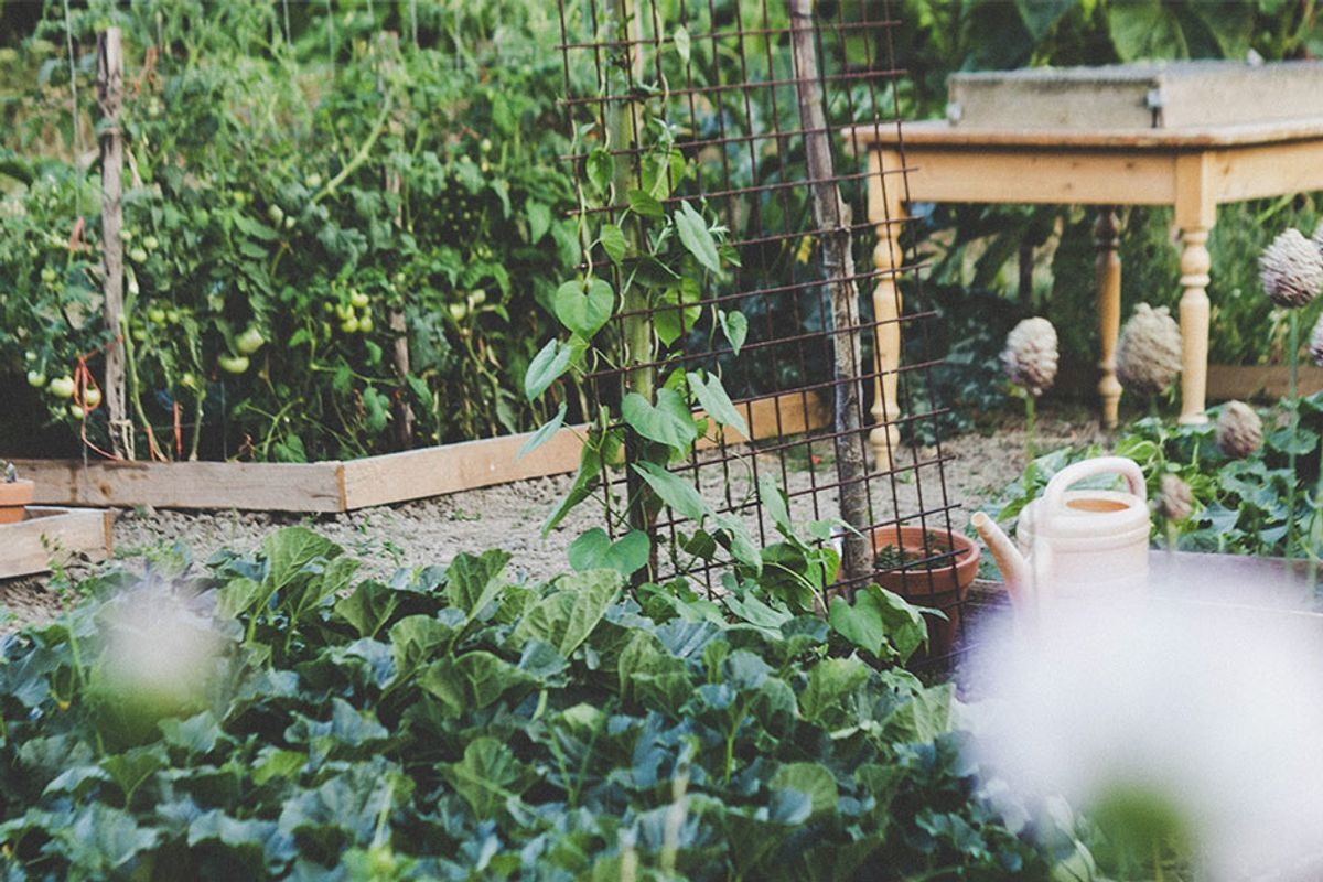 In Florida, it was illegal to have a vegetable garden in your front lawn. This couple fought back and won.