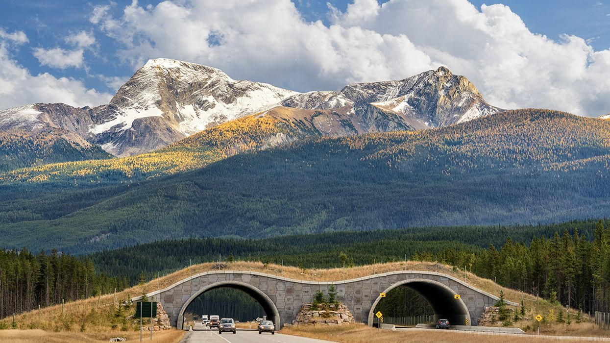 Will You See Wildlife Crossings on Your Vacation?