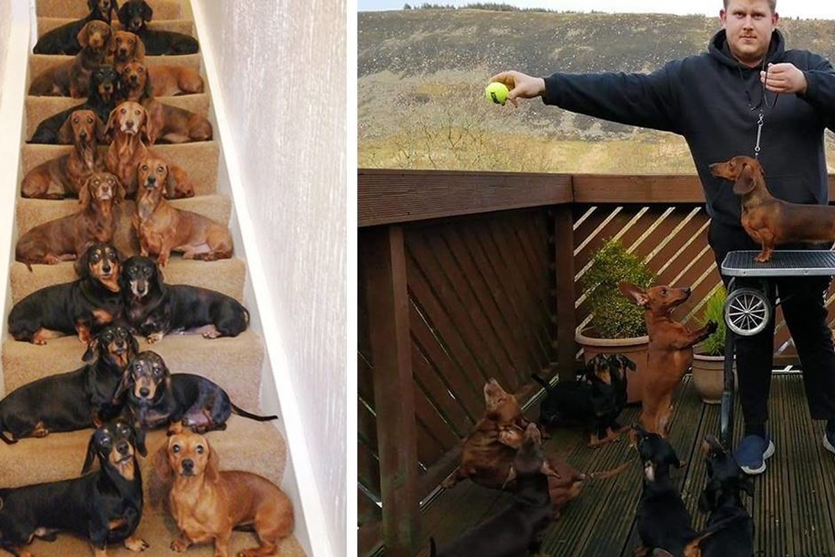 A teenager got the perfect shot of 16 posed dachshunds because a friend bet he couldn't