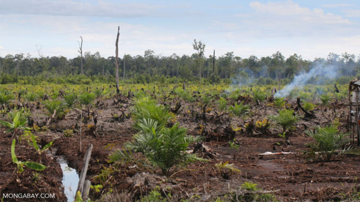 Indonesia Forest-Clearing Ban Criticized as 'Government Propaganda'