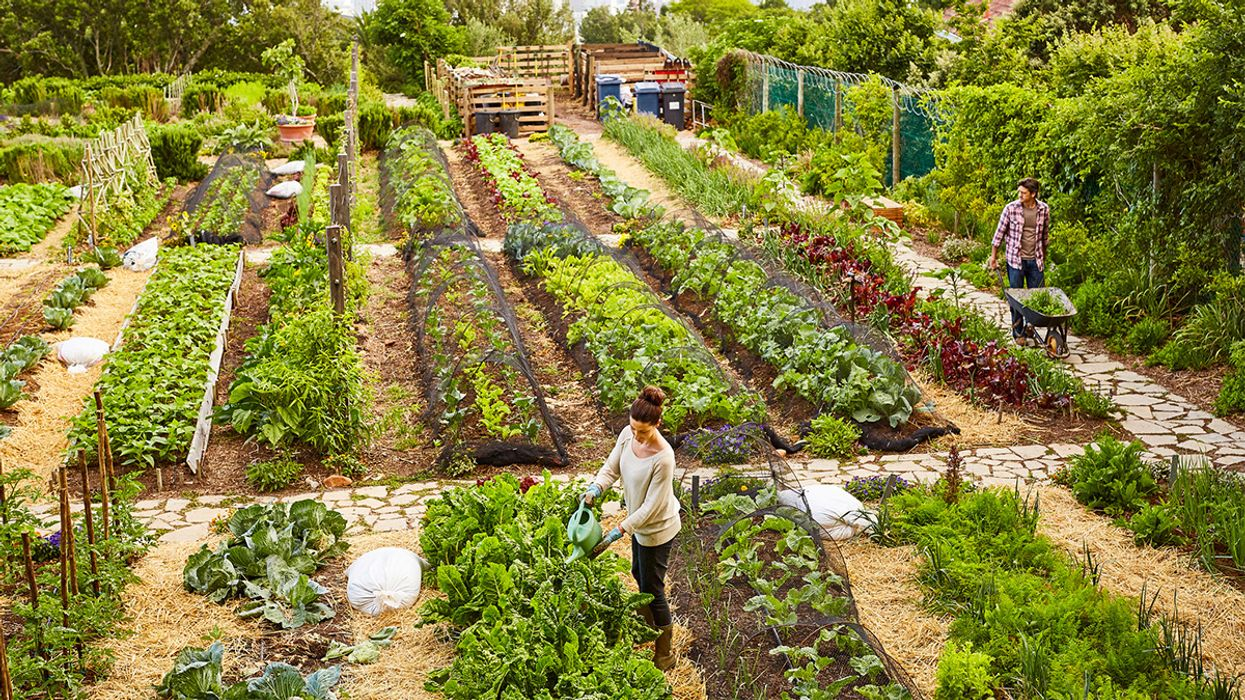 For a Sustainable Climate and Food System, Regenerative Agriculture Is the Key