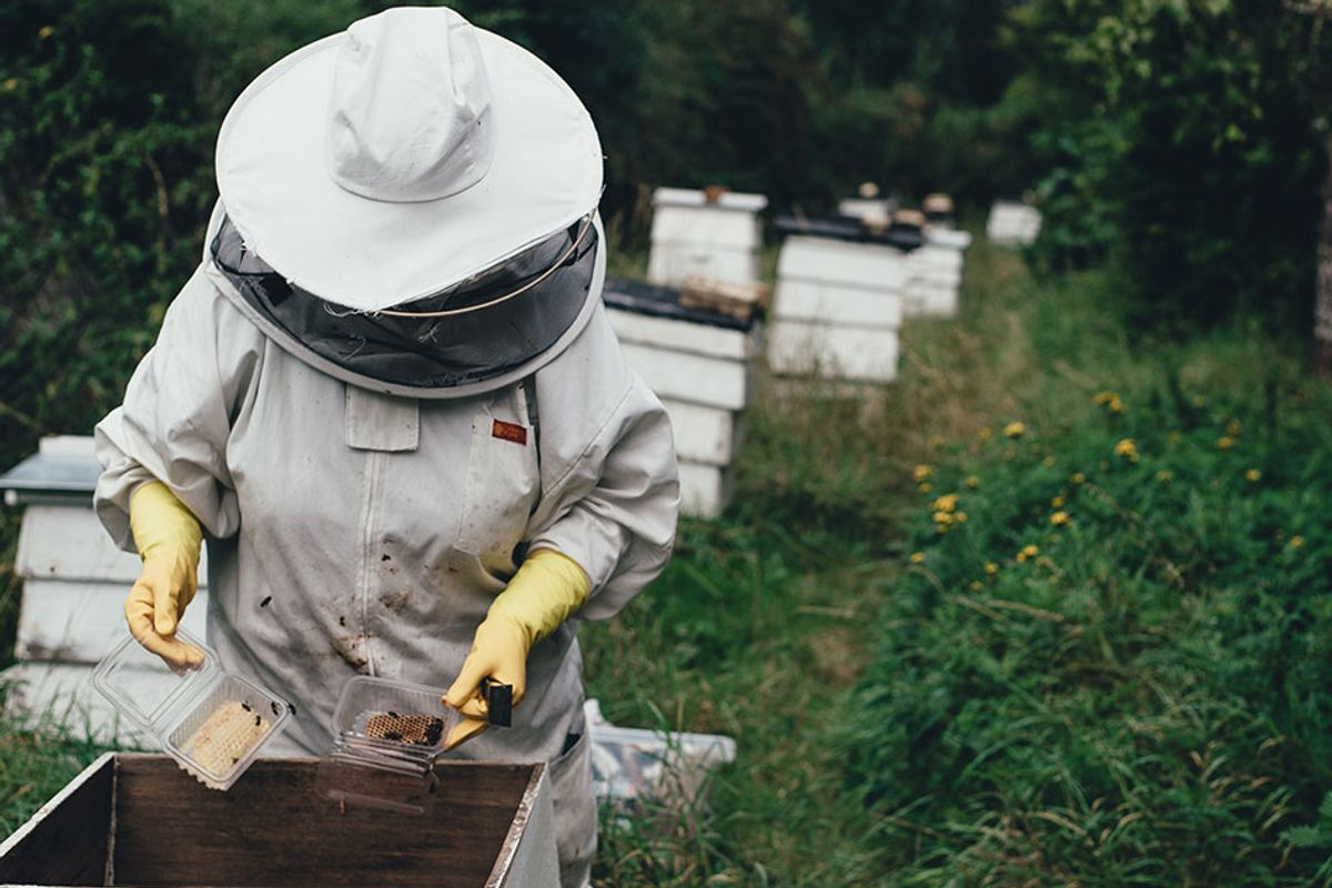 West Virginia coal miners are getting retrained as beekeepers to boost the economy and the environment