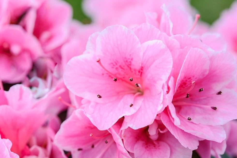 Pink Flowers: A Short Story