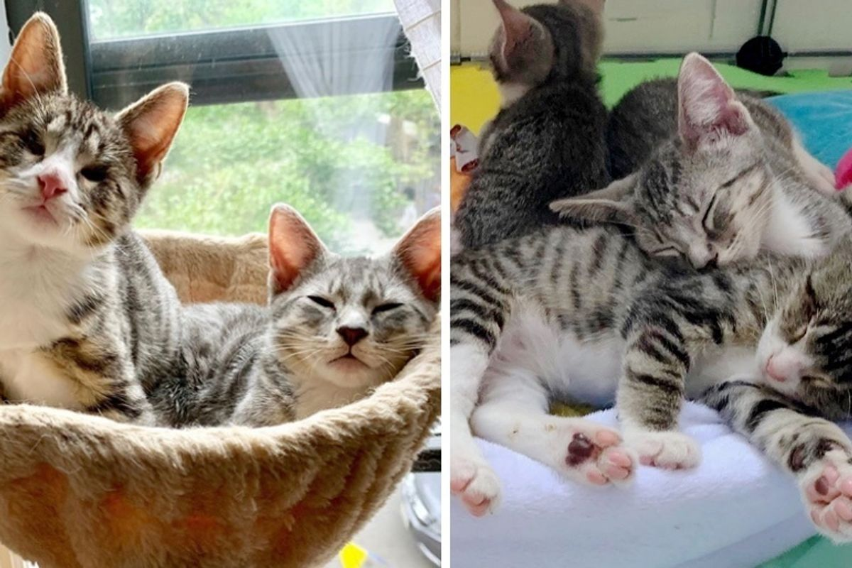 Blind Kitten Follows His Seeing Eye Brother Everywhere - They Find Perfect Family Together