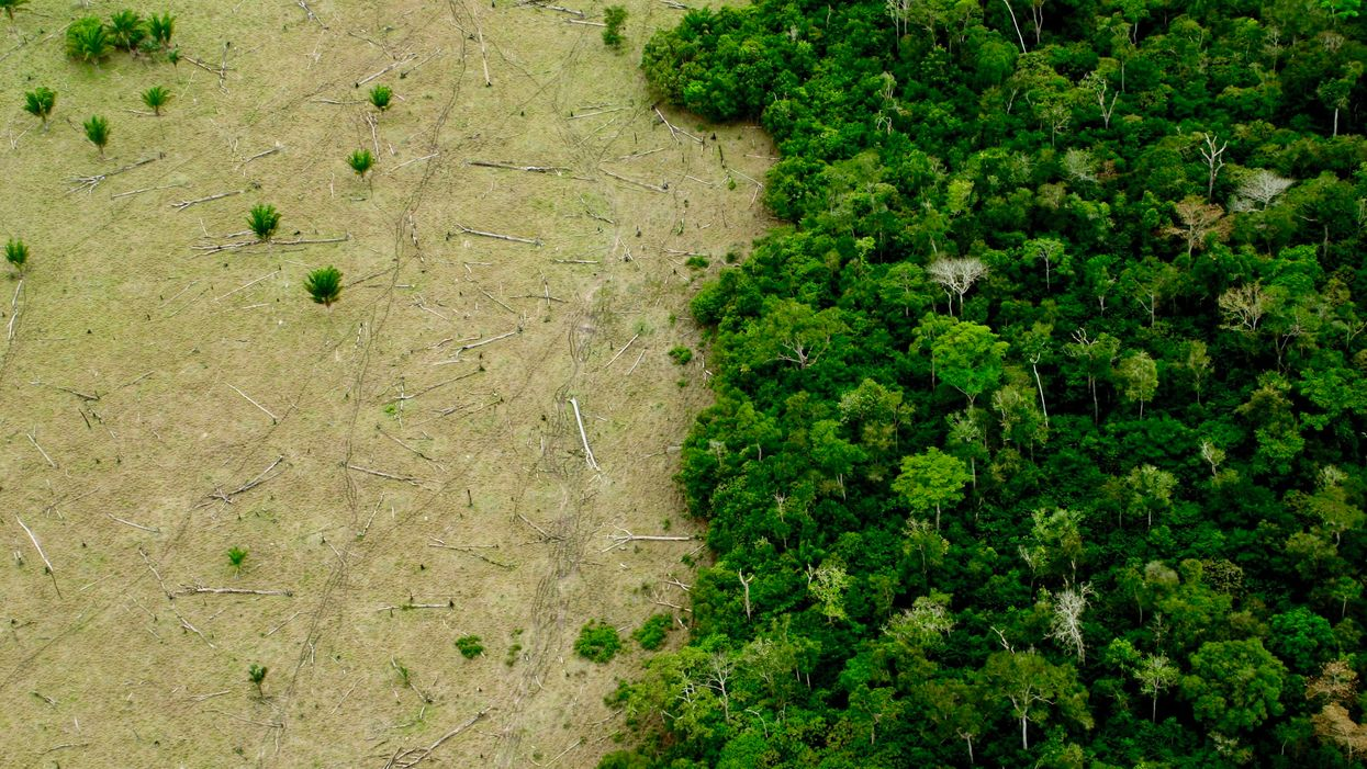 Norway Freezes $33.2M Transfer to Brazil's Amazon Fund Amid Deforestation 'Surge'