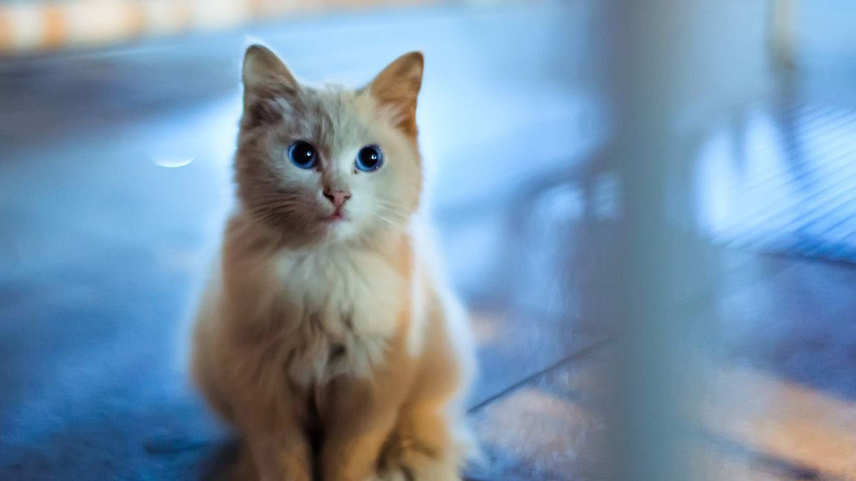 New vaccine (for cats) nixes allergic reactions for humans