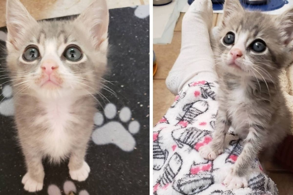 Kitten Insists on Sitting on Every Lap He Sees After Being Rescued from the Streets