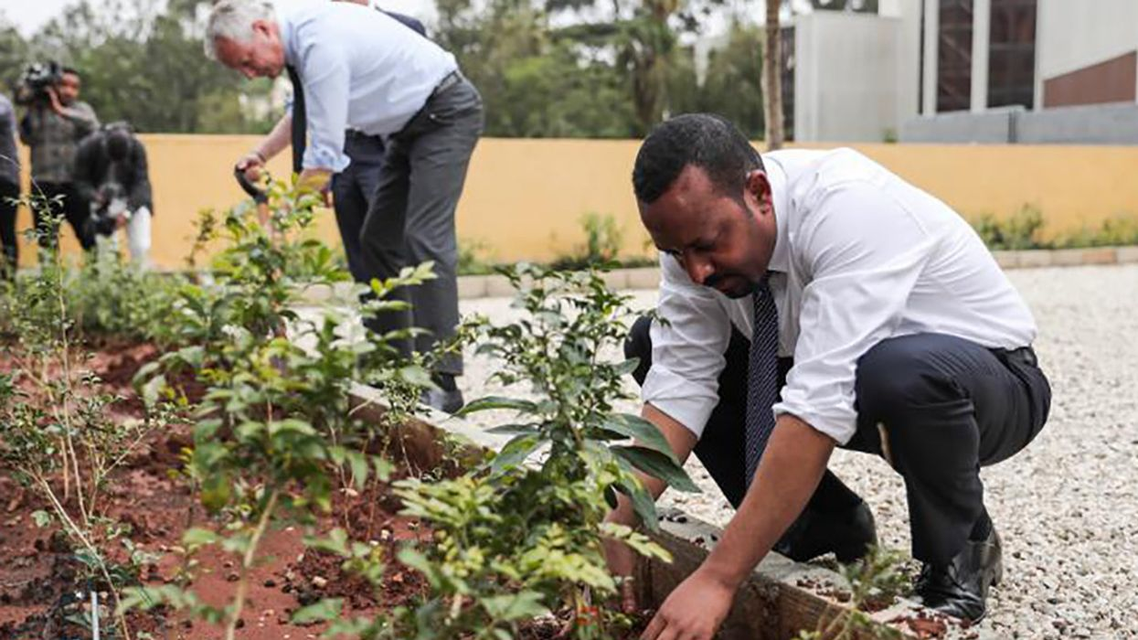 Ethiopia Plants Record-Breaking 350 Million Trees