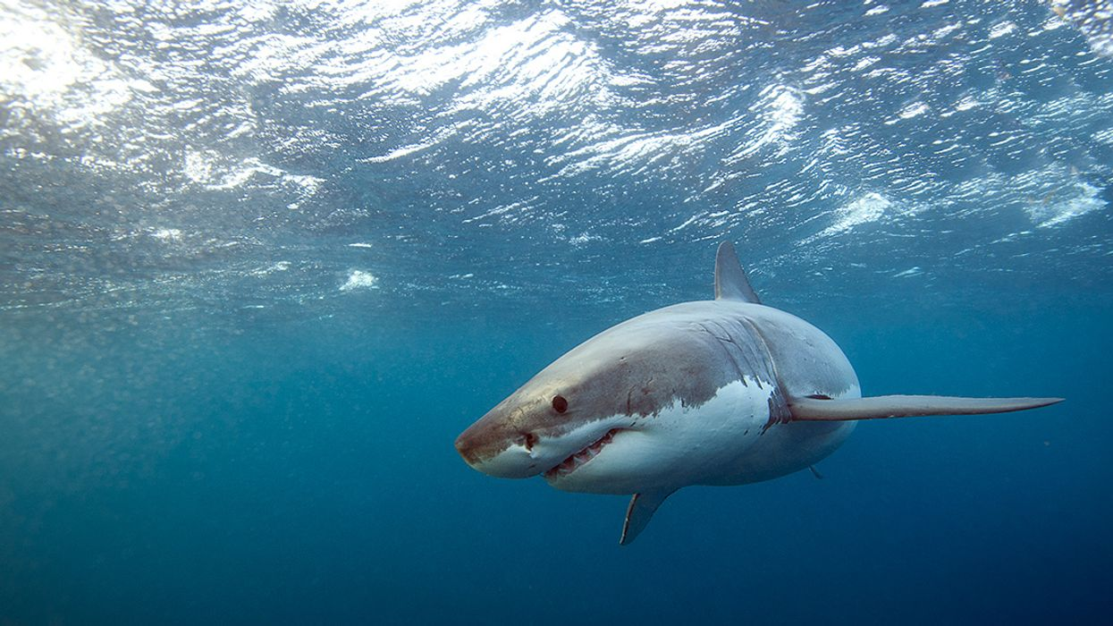 4 Amazing Shark Stories to Enjoy This Shark Week