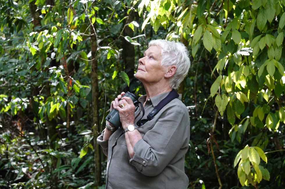 Judi Dench adopts 3 orangutans in a campaign to save rainforests from destruction