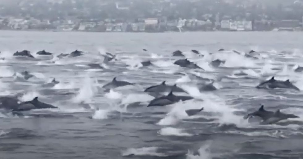 A massive 'stampede' of dolphins spotted off California coast.