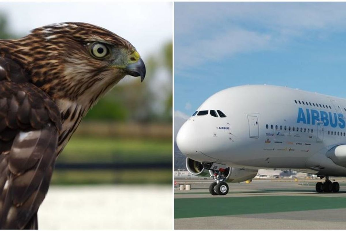 Airbus inspires future engineers with its awe-inspiring 'Bird of Prey' concept plane