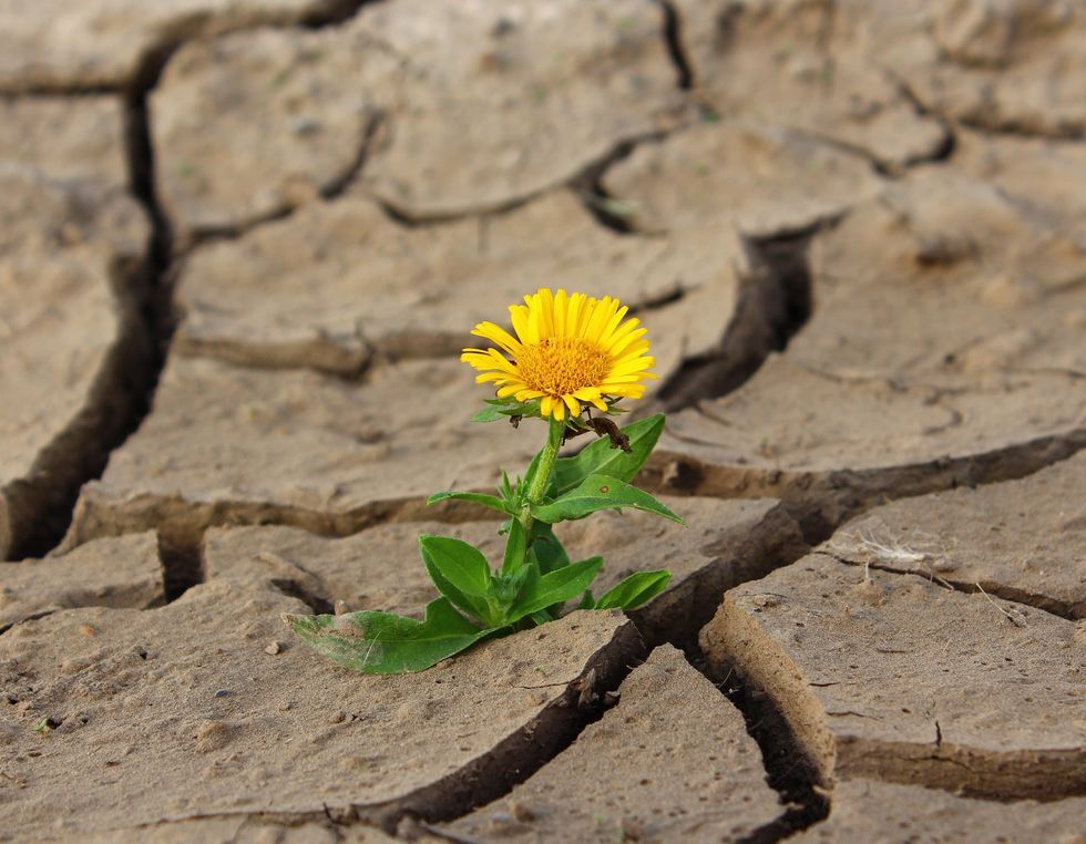 Positivity In The Face Of Climate Change