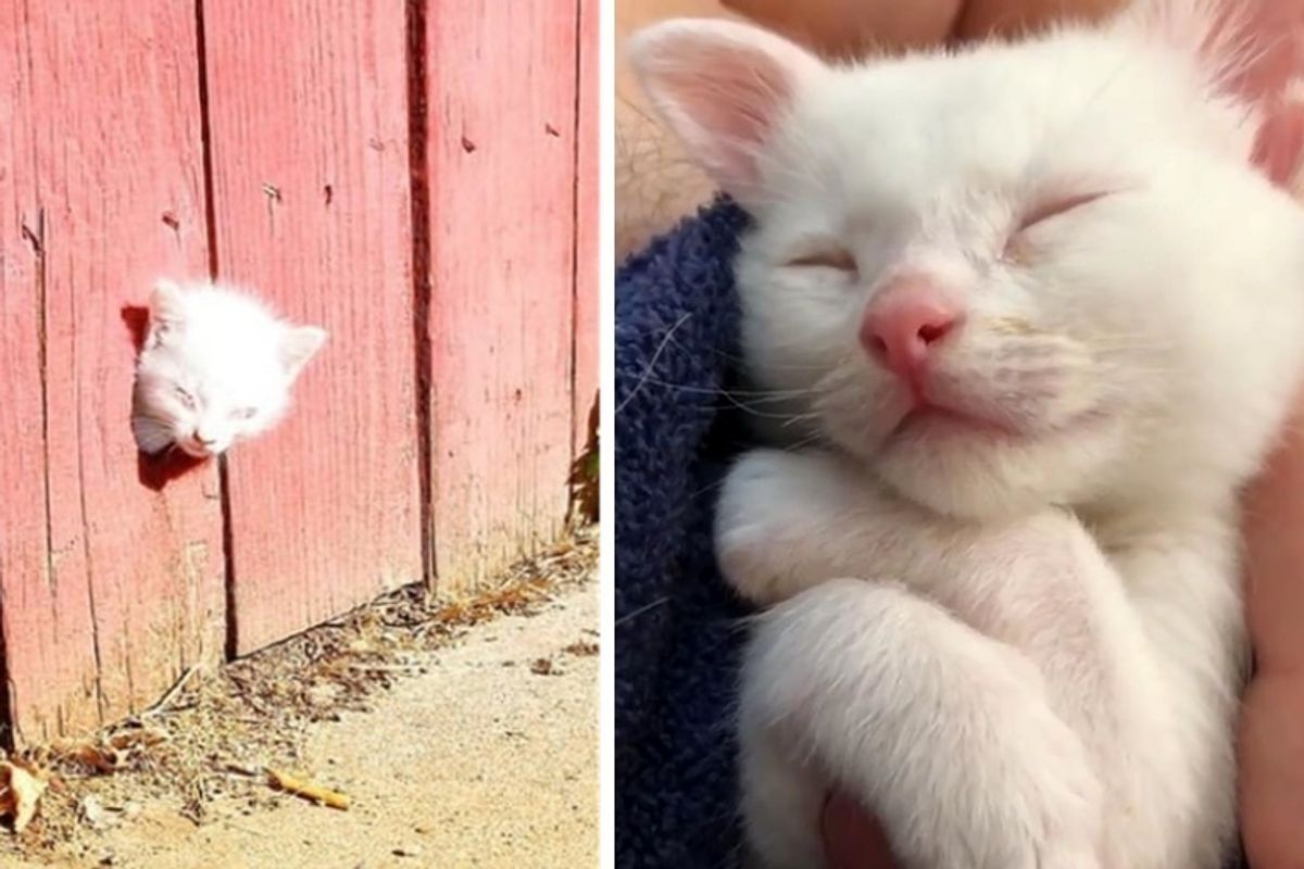 Rescuers Found Kitten Through a Fence and the Kitty Was Not Alone
