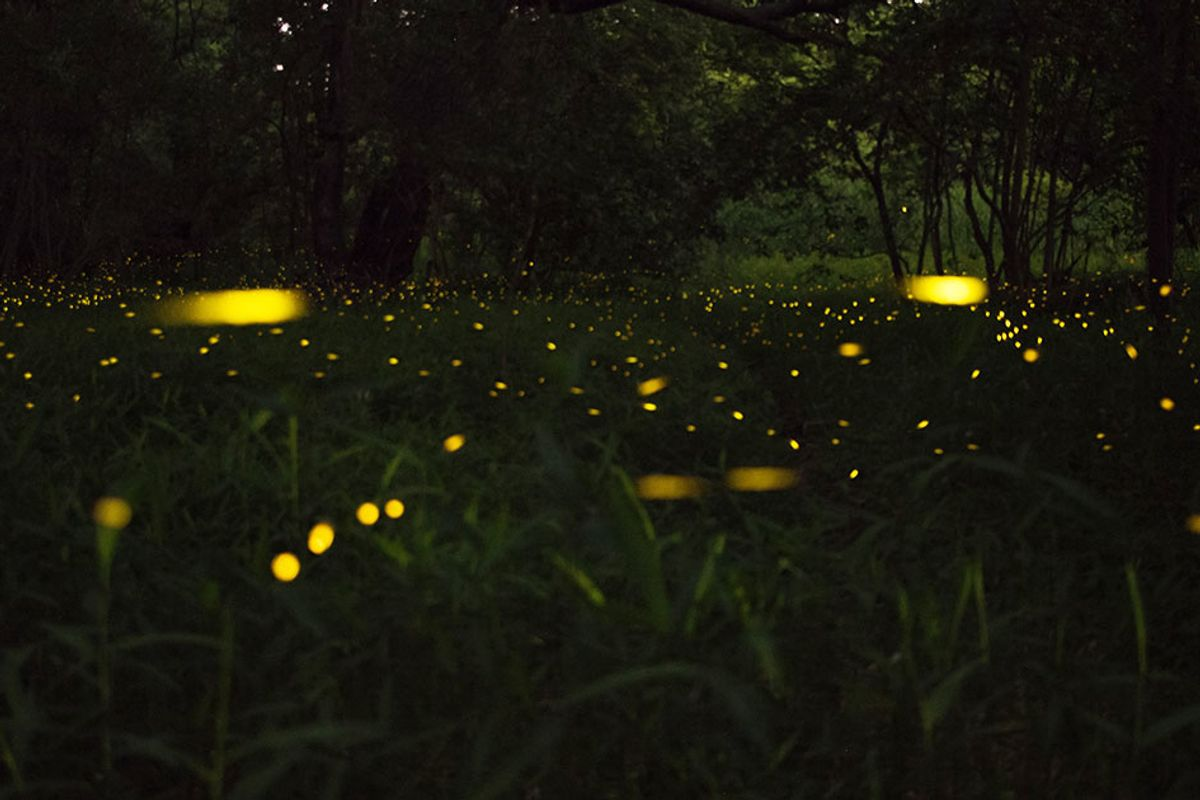 The lights are about to go out on fireflies, but we can stop it
