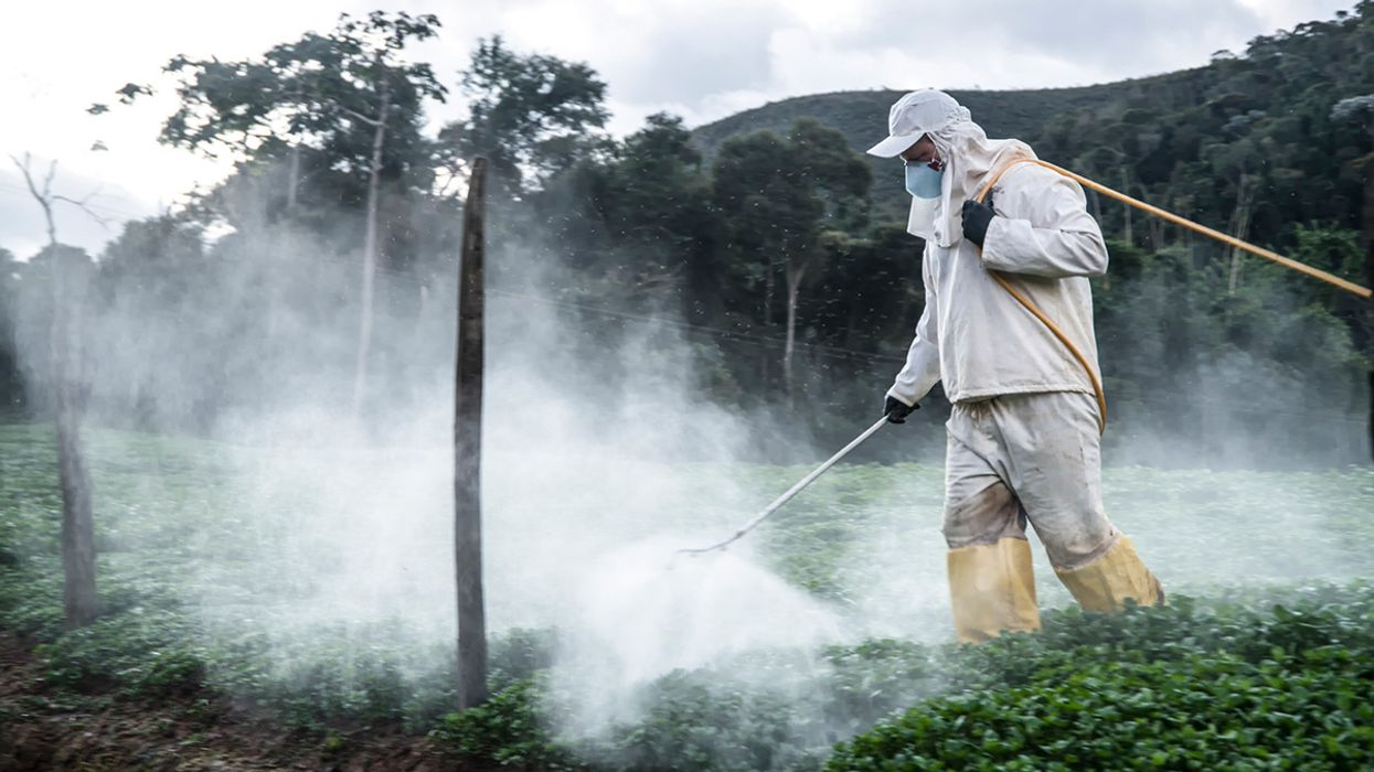 Bolsonaro Greenlights New Pesticides While Environmentalists Mourn 500 Million Dead Bees in Brazil