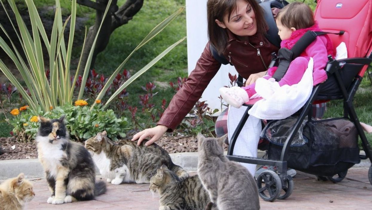 Cat ladies aren't 'depressed, anxious or alone,' say UCLA researchers