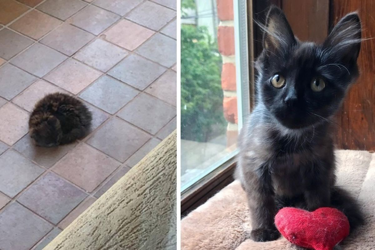 Kitten Who Was Found Sleeping Outside Alone, is So Happy Now That He is Loved