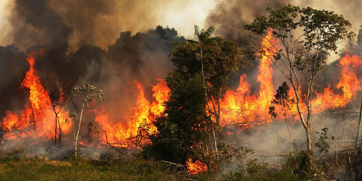 How to Help Fight the Amazon Fires