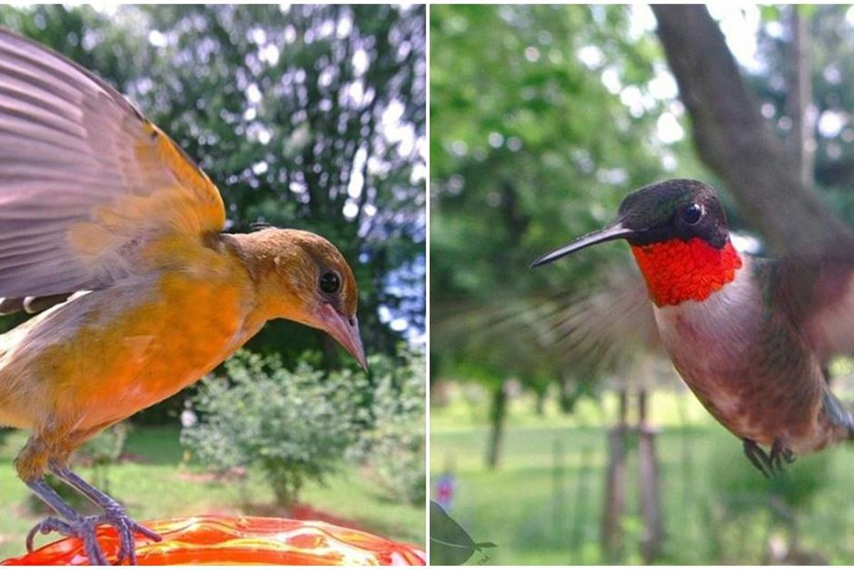 Woman sets up secret camera in a bird feeder and the images are incredible
