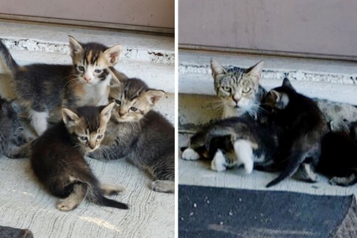 Cat Brings Her Kittens to the Home of the Person Who Helped Her