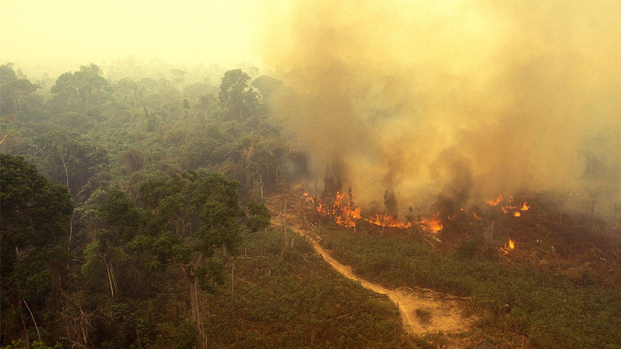 Record Number of Fires Burning in Amazon Rainforest