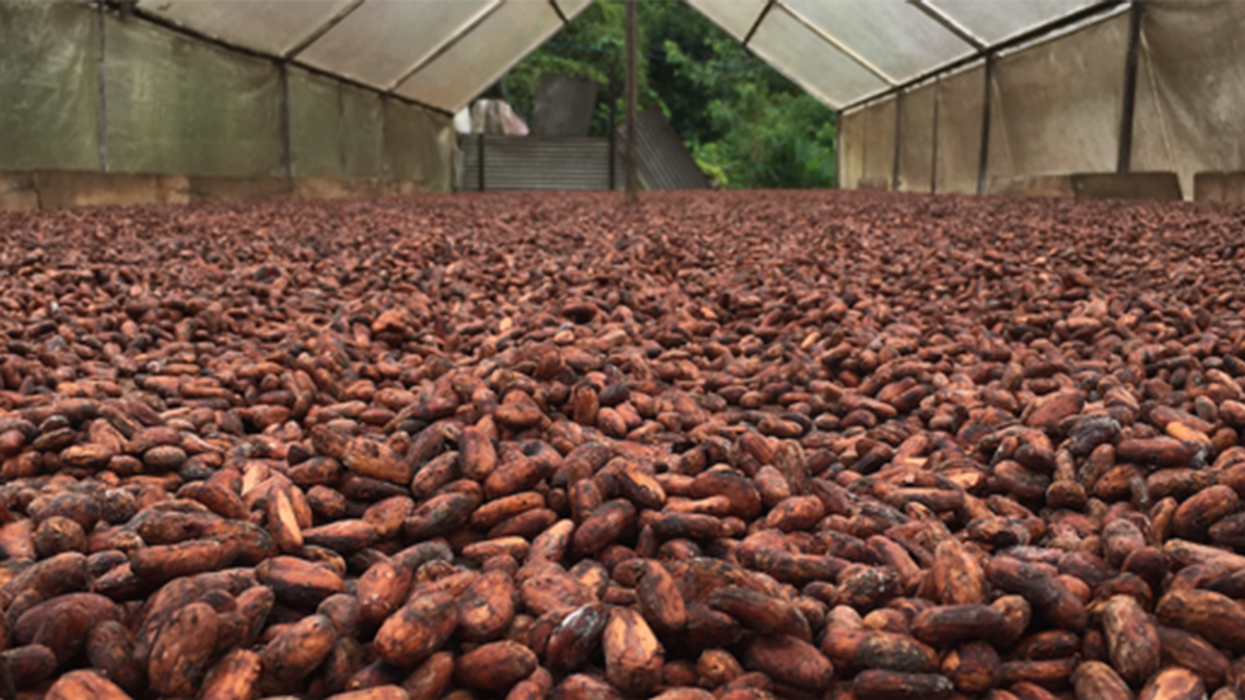 Melting Chocolate in a Warming World