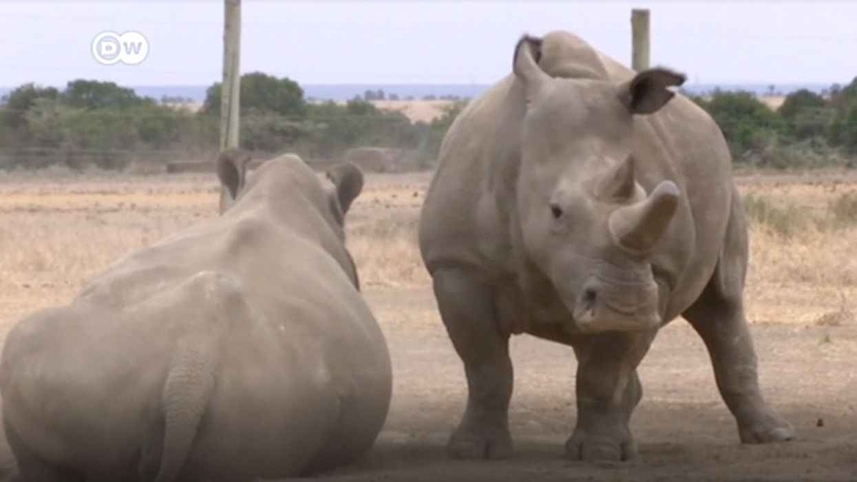 Scientists Fertilize Eggs From Last Northern White Rhinos