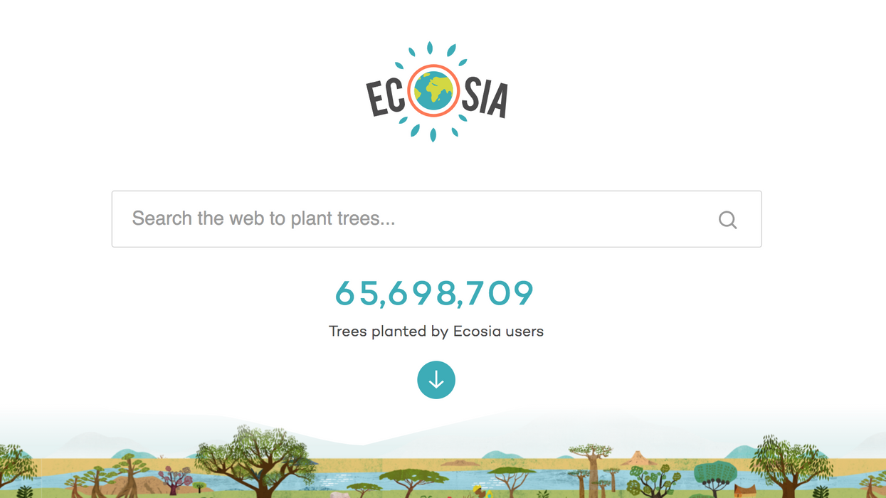 How this tree-planting search engine is reforesting the Brazilian Amazon