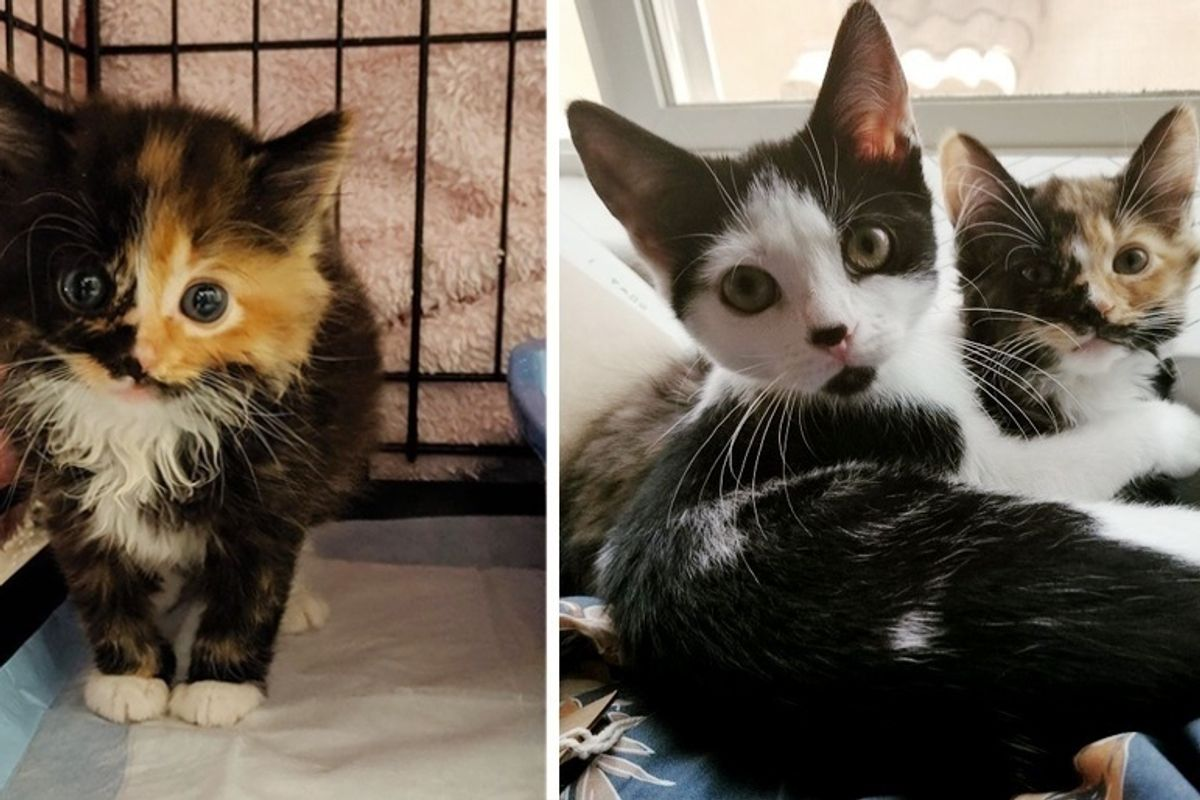 Woman Went to Local Rescue for a Kitten But Couldn't Leave Her Adopted Sister Behind