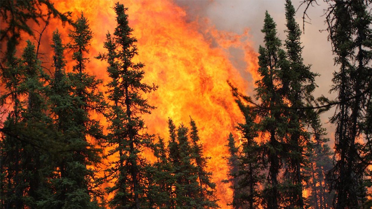 Disastrous Wildfires Sweeping Through Alaska Could Permanently Alter Forest Composition