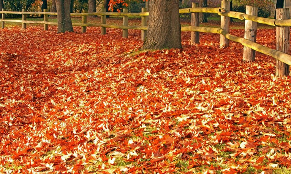 21 Awesome Autumn Activities