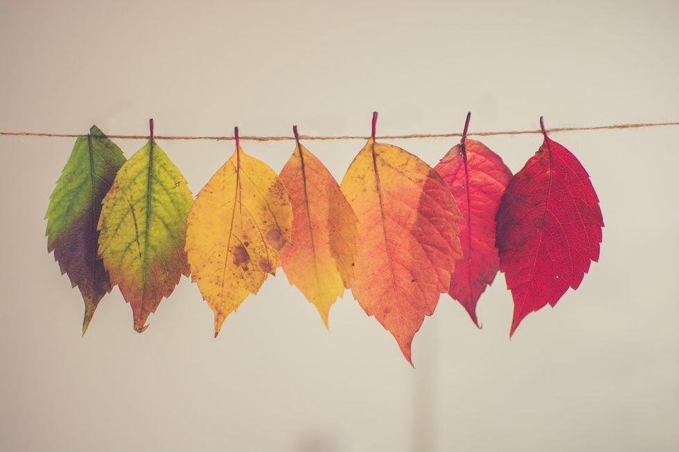 20 Reasons To Look Forward To Fall!